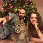 **MANDATORY BYLINE**PIC FROM @l_am_puma / Caters News  - (PICTURED: Alexander Dmitriev , 38 and Mariya Dmitrieva, 28, with their puma Messi in Russia. PIC TAKEN ON 24/12/17) - This couple are certainly living on the wild side  having taken in a pet puma. Mariya and Alexander Dmitriev fell in love with kitten Messi so much that they bought him from their local zoo in Penza, Russia. Nursing the weak puma, now two-and-a-half, back to the health, the couple fell in love with the wild cat even more.They have since adapted their hallway into a puma play pen, and invested in a special coat and harness for him so they can take him on walks.SEE CATERS COPY